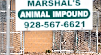 Verde Valley Humane Society stops accepting Camp Verde animals photo