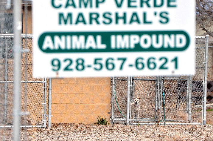 A dog barks inside the Camp Verde dog shelter on Thursday. Dogs only stay a few days in the town shelter. VVN/Vyto Starinskas
