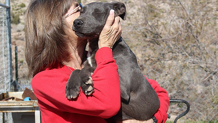 Ingrid, a silver Labrador puppy available for adoption, is shown with Cherie DaLynn, who founded the For the Luv of Paws no-kill shelter 15 years ago. (Photo by Agata Popeda/Kingman Miner)