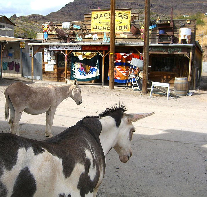 """A burro named """"Walter"""" has been appointed as the honoray mayor of Oatman. (Photo by Pretzelpaws, cc-by-sa-3.0, https://bit.ly/2OUQFcY)"""