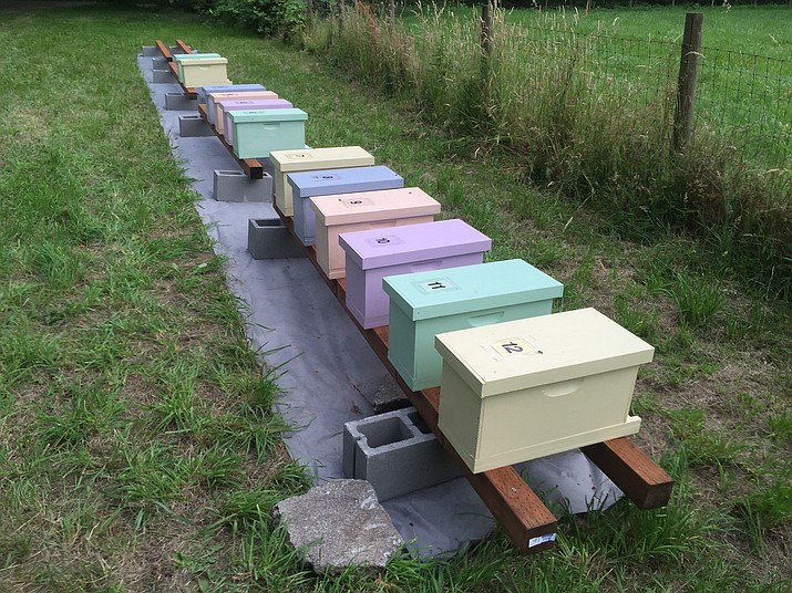 This photo taken July 1, 2016 shows a group of first-year honeybee hives in a pasture near Langley, Wash. Chemicals are routinely applied to kill insect pests and troublesome weeds but many are indiscriminate, devastating beneficial insects in the process. Landowners should avoid using pesticides in areas attractive to pollinators and instead use non-toxic methods to get rid of such pests as aphids. (Dean Fosdick via AP)