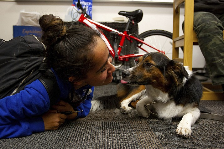 In this file image, Cassy Salinas plays with Sawyer at Mountain View High School on Nov. 19, 2019 in Mesa. The Prescott Valley PD Animal Control Division urges dog owners to leash, license and vaccinate their dogs against rabies in compliance with Town of Prescott Valley Town Ordinance Chapter Six. (Carly Bowling/The Arizona Republic via AP)