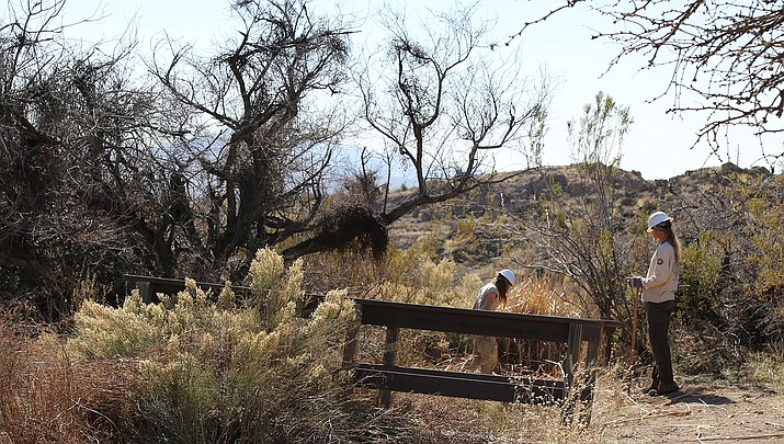 The City of Kingman and American Conservation Experience recently partnered to perform weed removal, trail enhancements and aesthetic improvements at Camp Beale Springs. (City of Kingman courtesy photo)