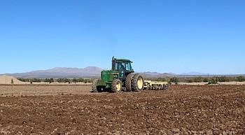 Fields of Dreams: Hemp operation underway near Dolan Springs photo