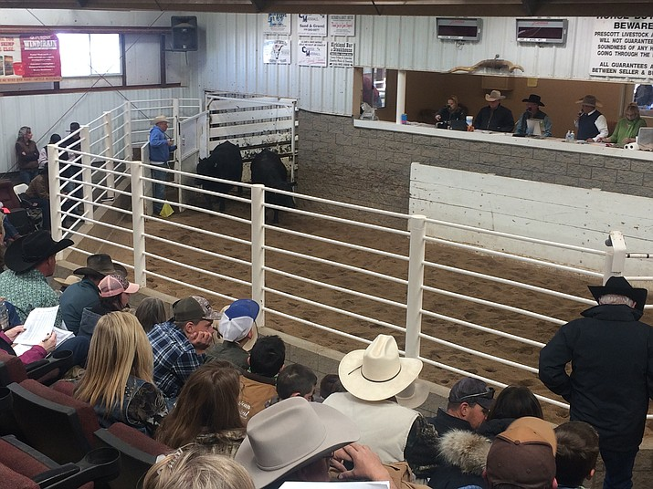 The annual Cattleman's Weekend was set to take place at the Prescott Livestock Auction Friday and Saturday, March 20-21; however, Program Editor and Sale Consultant Kathy McCraine told the Review on March 16 the event has been canceled because of pending weather as well as the threat from coronavirus.
