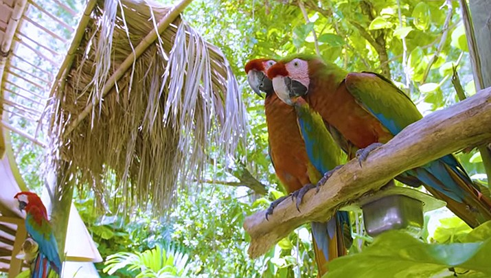 Jungle Island is offering free online lessons for children ages 5 to 12. (Visit Florida)