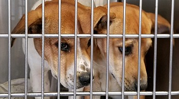 Mohave County Animal Shelter at 125% capacity, adoption event planned photo