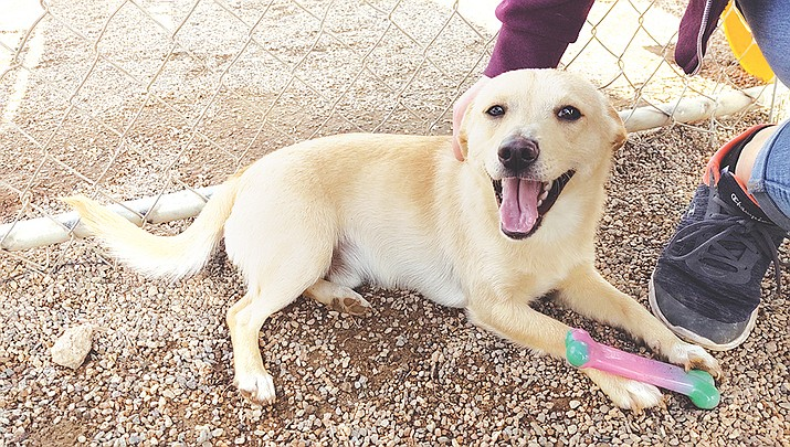 A spate of adoptions has helped the Mohave County Animal Shelter overcome overcrowding. (Photo by Brandy Mayo/Kingman Miner)