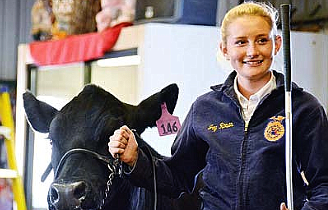 The Junior Livestock Show and a livestock auction will still take place, in an online internet format. (VVN file photo)
