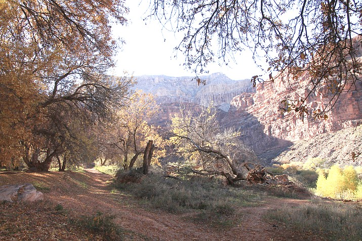 The Havasupai Tribe COVID-19 Relief Fund located on a GoFundMe page recently shared the tribe's economic struggle after deciding to temporarily suspended tourism on the reservation due to COVID-19. Individuals and companies like Kahtoola, are supporting the tribe through donations. Kahtoola is also hosting a virtual run May 1-10, with all proceeds going toward the tribe's relief efforts. (Loretta McKenney/WGCN)