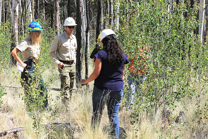 Entomologist Amanda Grady confers with Kaibab National Forest employees at an aspen stand north of Parks in 2018. (Wendy Howell/WGCN)