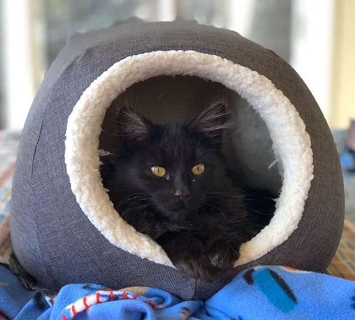 Lily (Courtesy/Catty Shack)