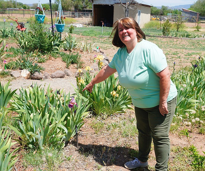 Suzie Cornman tends to her iris garden she and her husband Bob planted in the backyard of their home in Chino Valley. The garden is open to the public and is free to visit. (Aaron Valdez/Review)