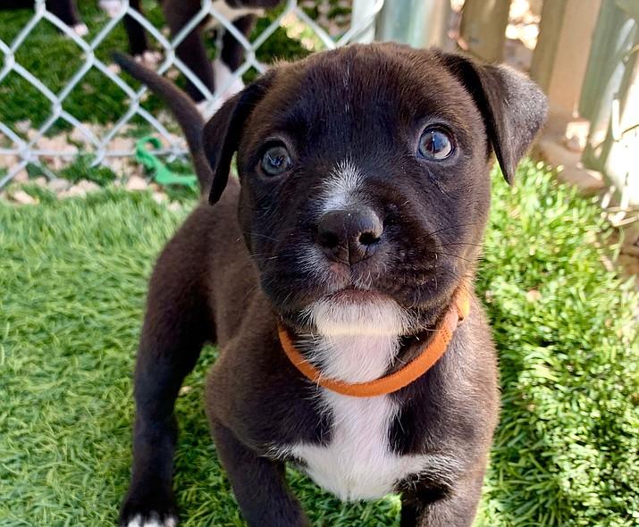 Seth (Courtesy/Chino Valley Animal Shelter)