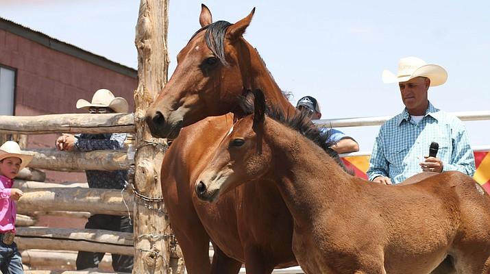 Babbitt Ranches postpones annual colt sale