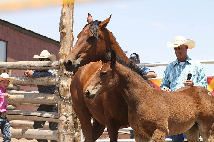 A mare shows off her colt during the 2015 Babbitt Ranches Colt Sale at Spiderweb Camp. (Loretta McKenney/WGCN)