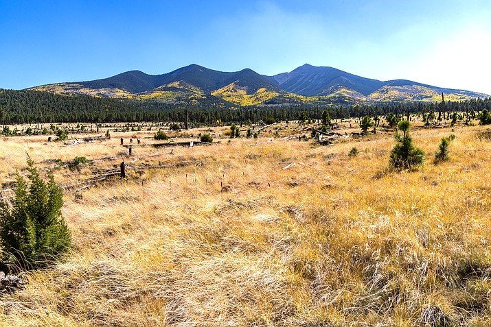 View of the San Francisco Peaks from FR 418, which runs north of the Peaks between Lockett Meadow Road (FR 551) and Hart Prairie Road (FR 151). This view from Reese Canyon looks at the Abineau-Bear Jaw Loop and upper Waterline Road. (Photo/Deborah Lee Soltesz, U.S. Forest Service Coconino National Forest)