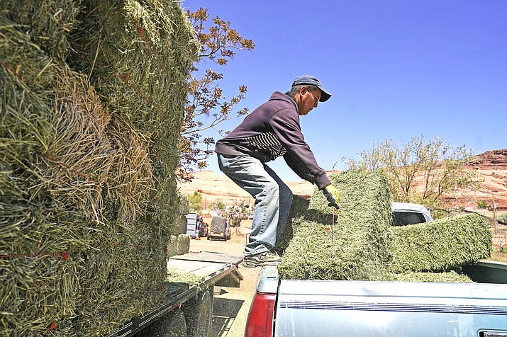 Charlie Whitehouse loads hay into the back of a pickup truck in Oljato-Monument Valley, Utah, on the Navajo reservation April 27. Even before the pandemic, people living in rural communities and on reservations were among the toughest groups to count in the 2020 census. (AP Photo/Carolyn Kaster)
