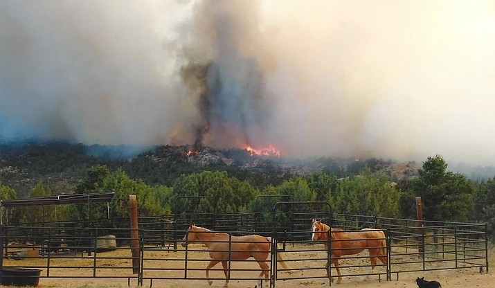 Two horses trot in their pen near Williamson Valley Road while the Doce Fire burns through the Granite Mountain wilderness in 2013. (EEE/Courtesy)
