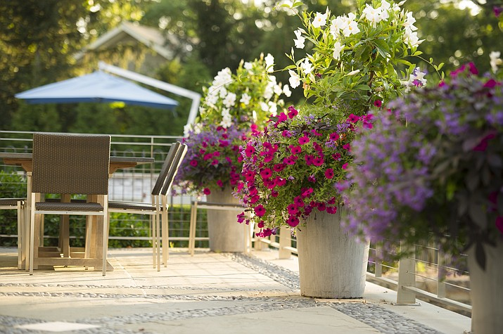 This photo provided by Janice Parker Landscape Architects shows potted flowering plants at a home in Darien, Conn. Such plants are an easy addition to any outdoor space, and can bring beautiful color and pleasant fragrances. (Neil Landino Jr./Janice Parker Landscape Architects via AP)