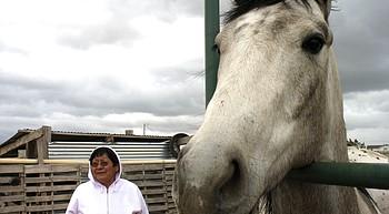 Navajo horse program identifies 32 genetically diverse horse breeds photo