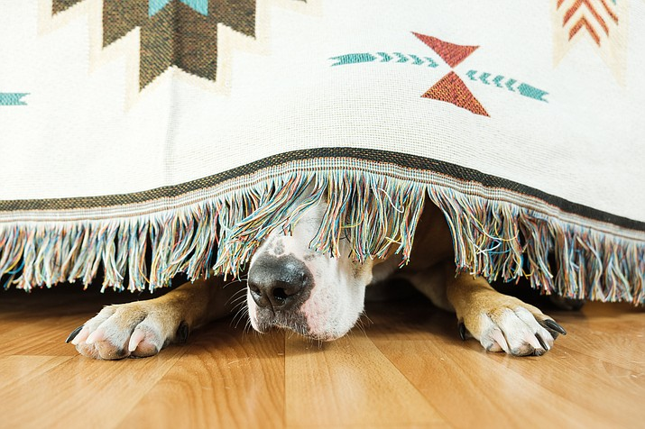 The Fourth of July is a fun and exciting time with fireworks and celebrations of our nation's birthday. However, for our pets, it can be a scary and dangerous time.