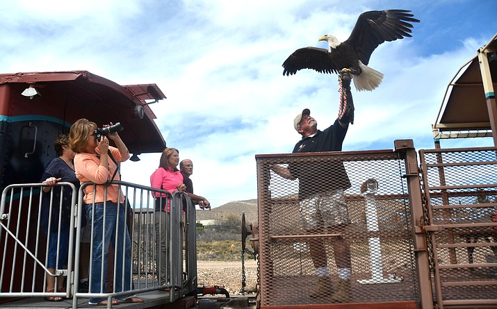 The Verde Canyon Railroad will have the Liberty Wildlife eagle on the Fourth of July. VVN/Vyto Starinskas