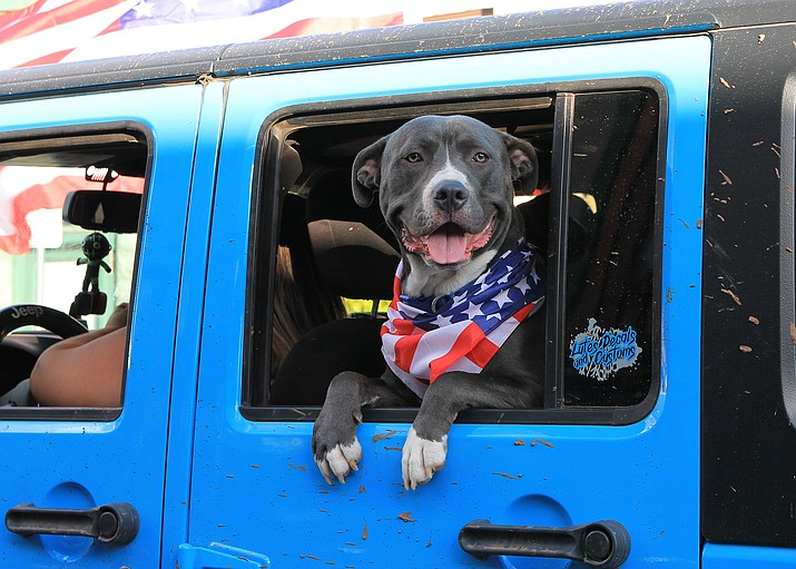 """A dog is decked out for the Fourth of July in Williams. The vehicle was one of dozens that showed up for a """"peaceful protest"""" parade through Williams July 4. (Wendy Howell/WGCN)"""