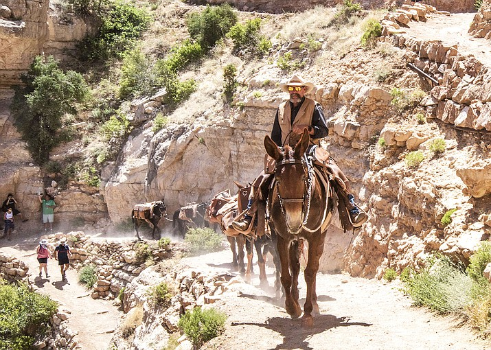 Livery Assistant Manager Don Bristow packs supplies up the Bright Angel Trail from Phantom Ranch once a week during the temporary shut down at the Grand Canyon because of the coronavirus pandemic. Mule rides resumed June 15. (V. Ronnie Tierney/WGCN)