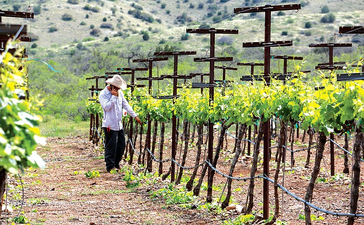 Last year, the Verde Valley finished fourth in a national USA Today ranking of wine regions, besting some known California areas. The Verde Valley is among the finalists again in 2020, and you can vote until Aug. 12 noon at 10best.com/awards/travel.