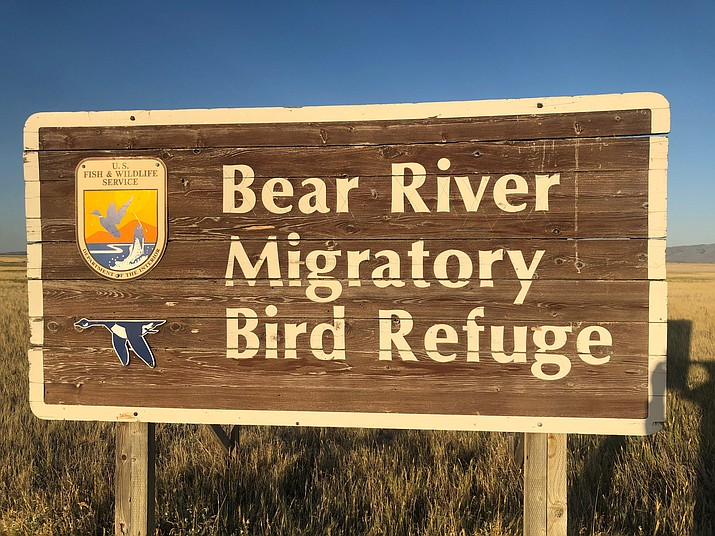 The Bear River Migratory Bird refuge offers bird watching in a variety of habitats. (Eric Moore/Courtesy)
