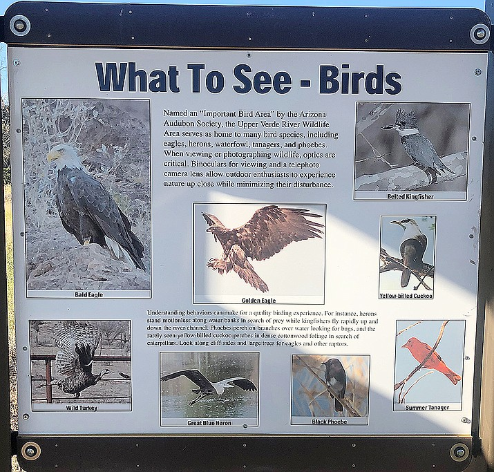 This is a photo of one of the signs from the Upper Verde River Wildlife Area, highlighting some of the bird species that can be seen there including the yellow-billed cuckoo — which I didn't see. (Eric Moore/Courtesy)