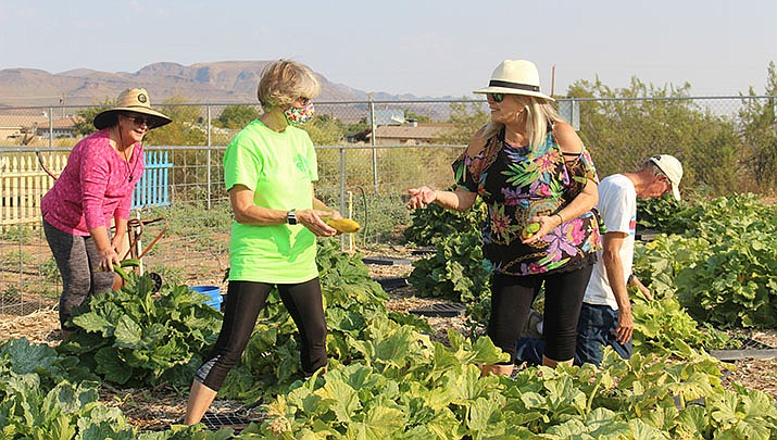 Gardeners harvest the vegetables of their labor at the DIG IT Kingman Community Garden, 2301 Lillie Ave., in Kingman. From left are Nancy Cristler, Denise Neath and Debra Sixta. (Photo by Agata Popeda/Kingman Miner)