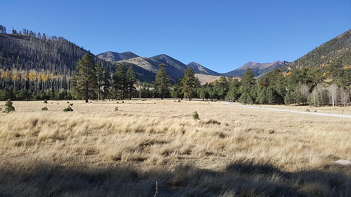 Lockett meadow. (Photo/USFS)