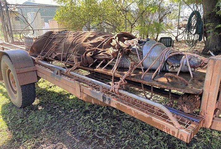 In this photo provided by Northern Territory Dept. of Tourism, Sport and Culture, a 350-kilogram (770-pound) male crocodile is tied to the back of a trailer in Katherine, Australia on Aug. 28, 2020. Wildlife rangers trapped the 4.4-meter (14.5-foot) saltwater crocodile at a tourist destination in Australia's Northern Territory, the biggest caught in the area in years, a wildlife ranger said on Monday, Aug. 31, 2020. (Northern Territory Dept. of Tourism, Sport and Culture via AP)