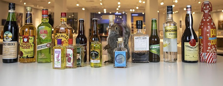 In this photo dated Tuesday, Aug. 25, 2020, made available by Disgusting Food Museum, a selection of drinks, including coca leaf liqueur, ant gin, fishy whisky and scorpion vodka along with a squirrel decanter, are on display at the Disgusting Food Museum in Malmo, Sweden, that will open Saturday Sept. 5. Each exhibit is considered a delicacy somewhere in the world, but strikes many unaccustomed palates as revolting, and the exhibit curator says humans have always been inventive when it comes to making booze. (Andreas Ahrens / Disgusting Food Museum via AP)