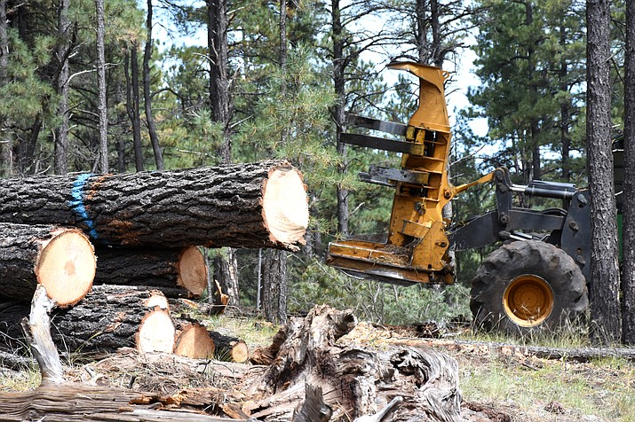 A feller bunch-er cuts a tree during the Bill Williams Mountain Restoration Project on Kaibab National Forest in 2019. (Photo/Dyan Bone, Kaibab National  Forest)