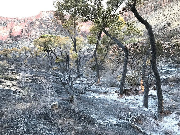 A fire burn scar to Cottonwood Creek shortly after the Cottonwood Creek Fire in 2019. (NPS Photo/Jacob Tung)