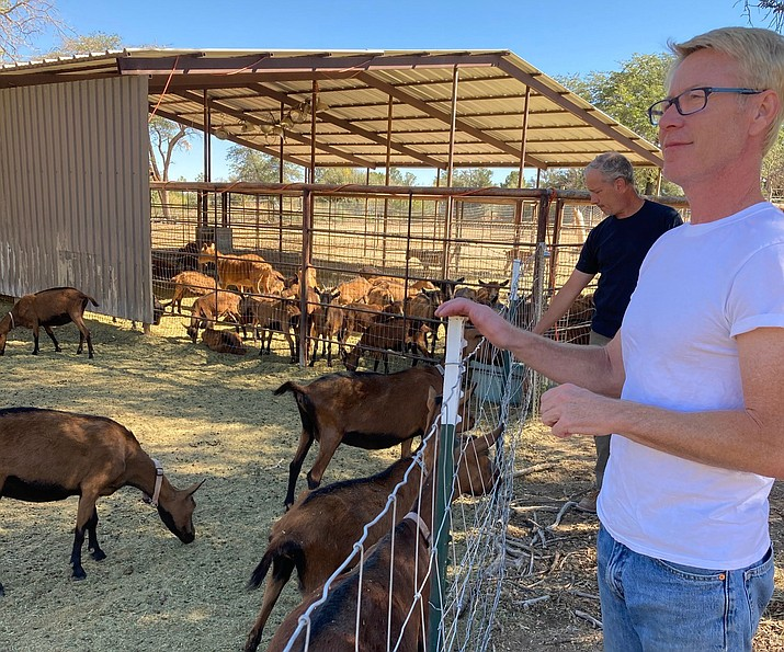 Capream Dairy co-owners Gary Carder, foreground, and Gerald Rogers tend to a herd of Oberhasli goats on their small farm in Williamson Valley. They use the goats' sweet-flavored, low-fat milk for making gelato. (Doug Cook/Courier)