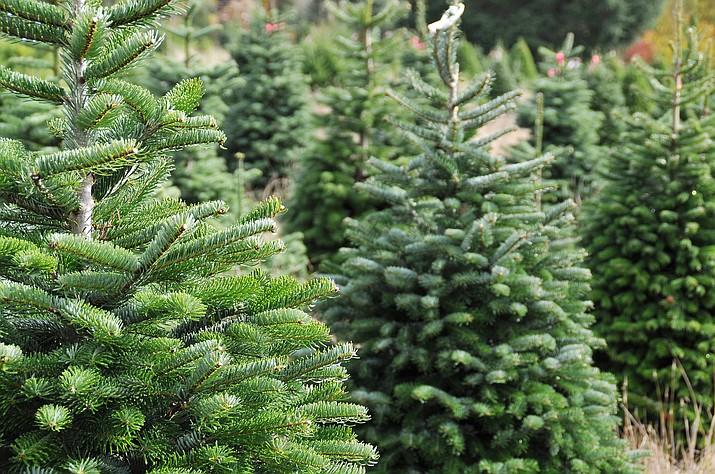 2020 Wow Christmas Card Loliapaulina Deviantart Christmas Tree Permits 2020 – Christmas Ornament