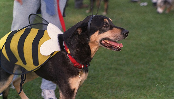 A pet costume contest will be part of the Howl'n & Meow'n Trick or Treat for pets event on Wednesday, Oct. 28. (Photo by Nancy Wong, cc-by-sa-4.0, https://bit.ly/341madu)