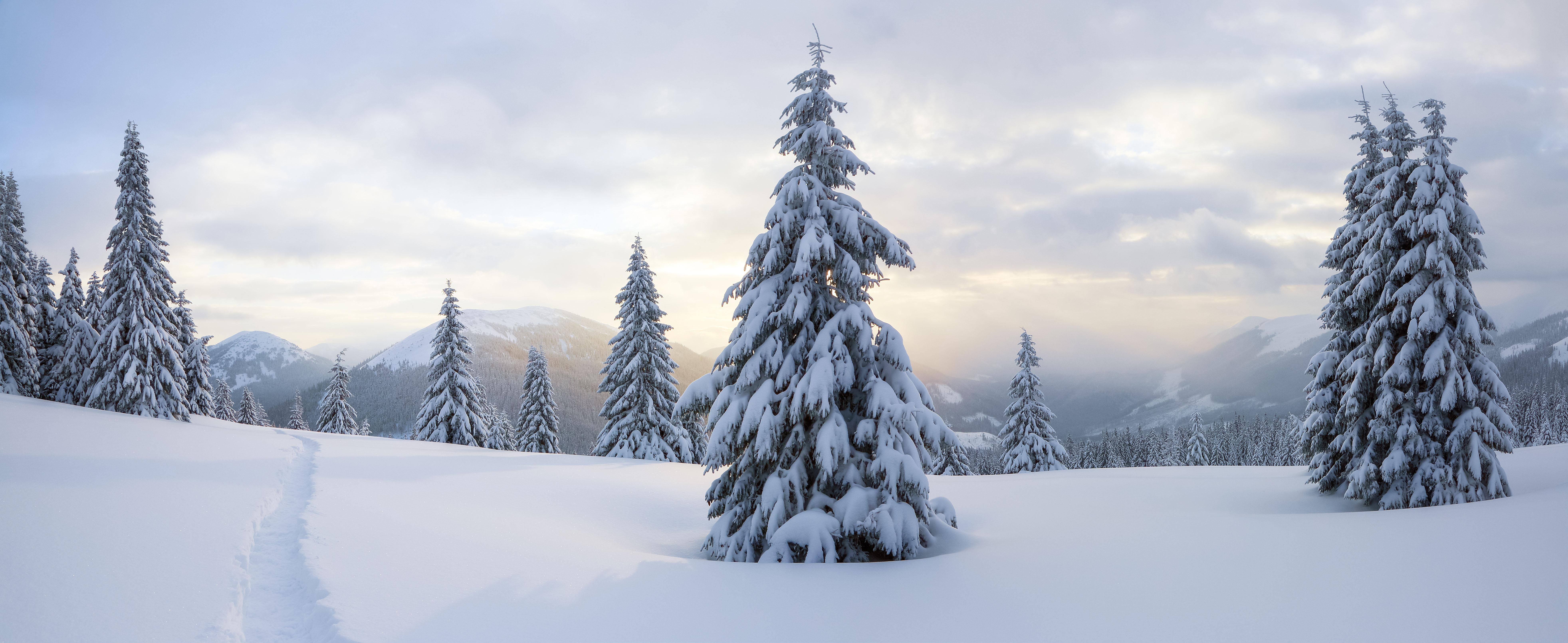 Prescott National Forest Christmas Tree Permits 2021 Kaibab Forest Christmas Tree Permits Available Now Williams Grand Canyon News Williams Grand Canyon Az