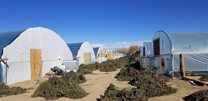 Federal, state, local and tribal agencies conducted a marijuana bust in Shiprock, New Mexico Nov. 9-11 with 21 farms and 1,107 grow houses searched. (Photo courtesy of the Navajo Police Deparment)