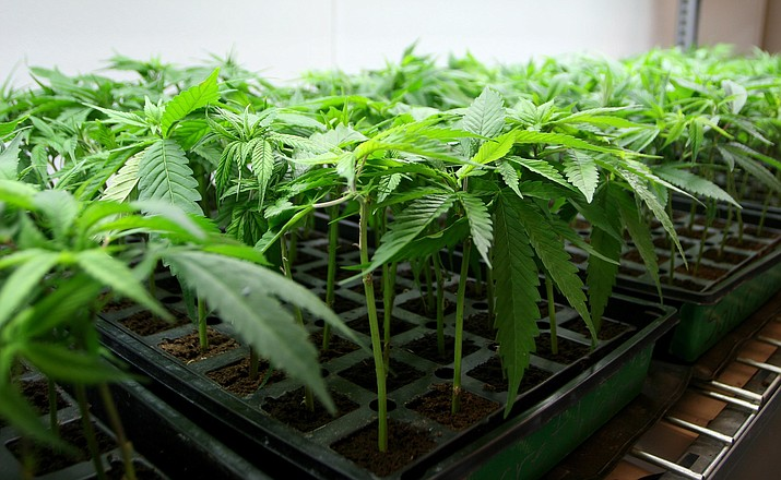 Wednesday, the Camp Verde Town Council will consider an ordinance that prohibits recreational marijuana sales within town limits. VVN/Bill Helm