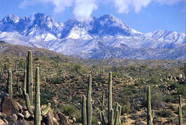 Tonto National Forest is the largest national forest in Arizona. (Photo/Tonto National Forest)