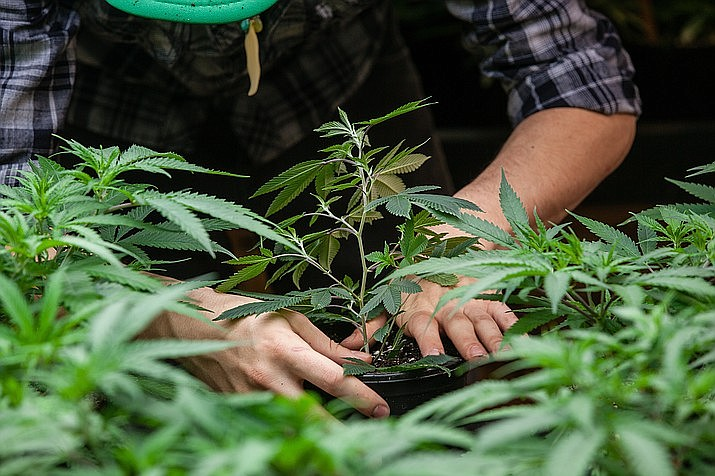 State health officials began accepting applications Tuesday to run some of the more than 120 recreational sites that voters agreed to in November allow to sell marijuana to anyone. file photo