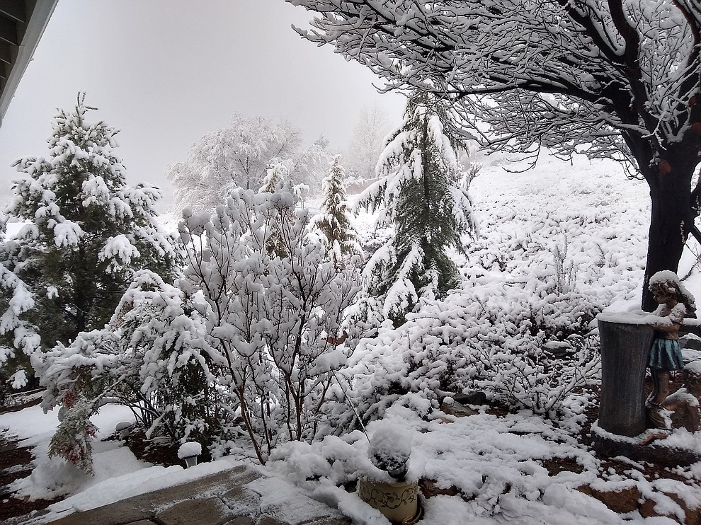 Front yard in Diamond Valley. Photo by Suzanne Sanchez.