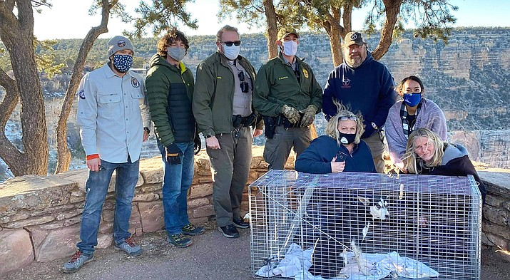 Photo courtesy of Yavapai Humane Trappers Animal Search and Rescue.