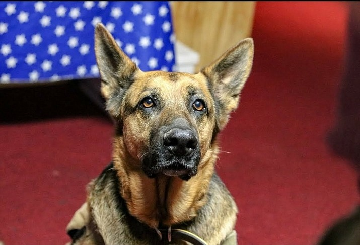 A class is being offered March 11 for business owners to understand their rights in service-dog related situations. (Photo/For Veterans Sake Foundation)