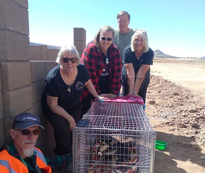 Members of the Yavapai Humane Trappers pose for a photo with Ladybug, a runaway female corgi mix that escaped from its backyard enclosure in the Stoneridge area of Prescott Valley earlier this month. (YHT/Courtesy)